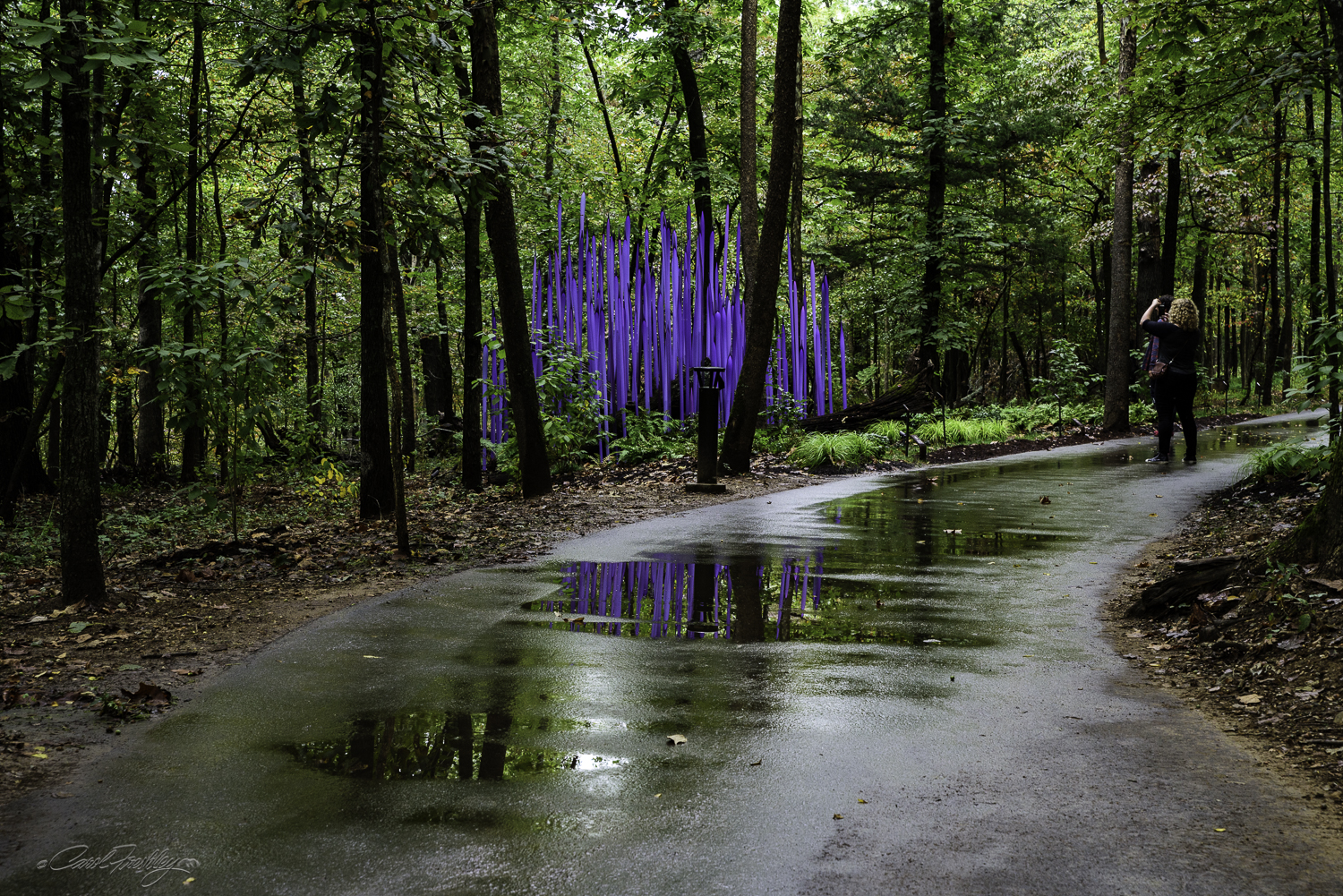 Chihuly in the Forest-18-11.jpg