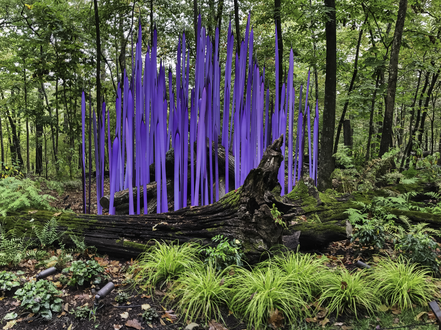 Chihuly in the Forest-21-12.jpg