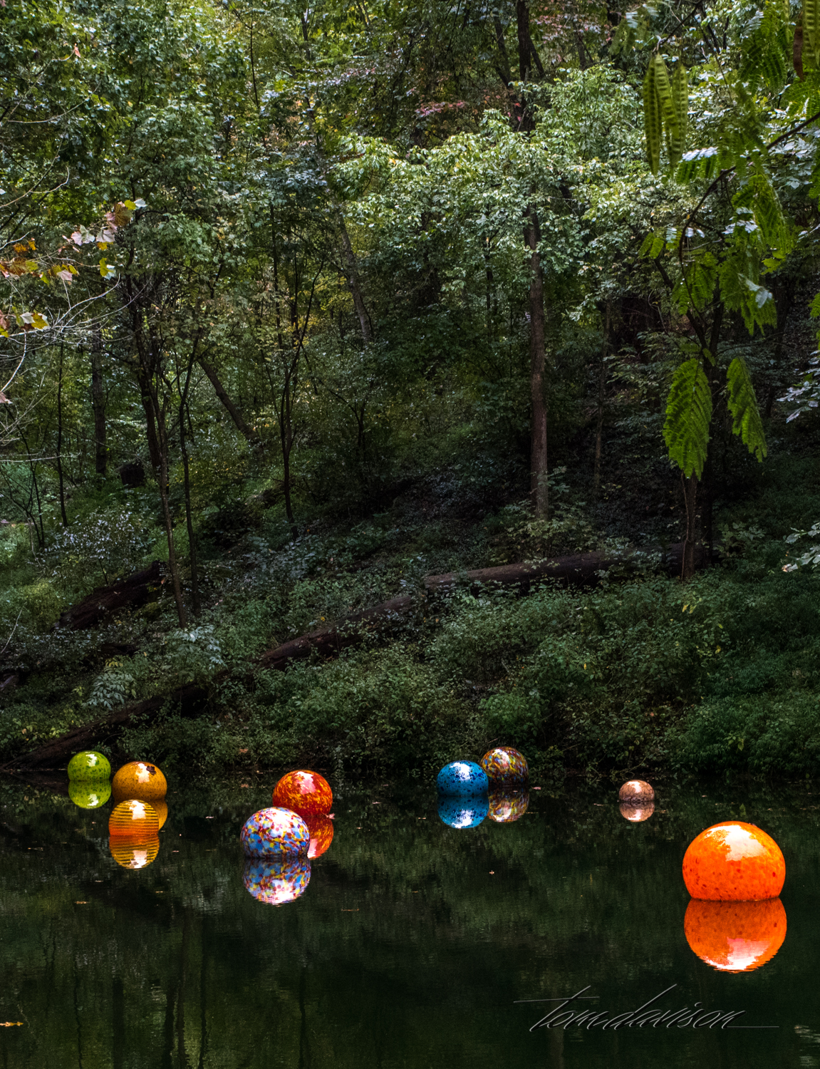 Chihuly TD (302 of 10).jpg