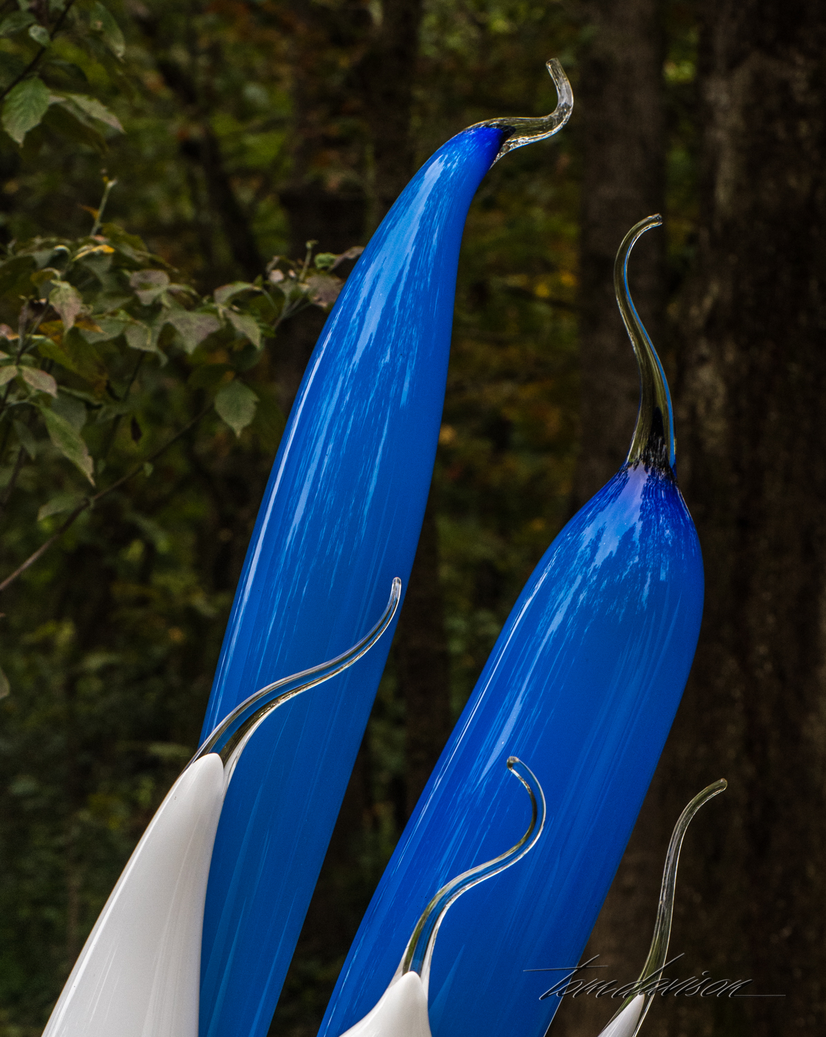Chihuly TD (306 of 10).jpg