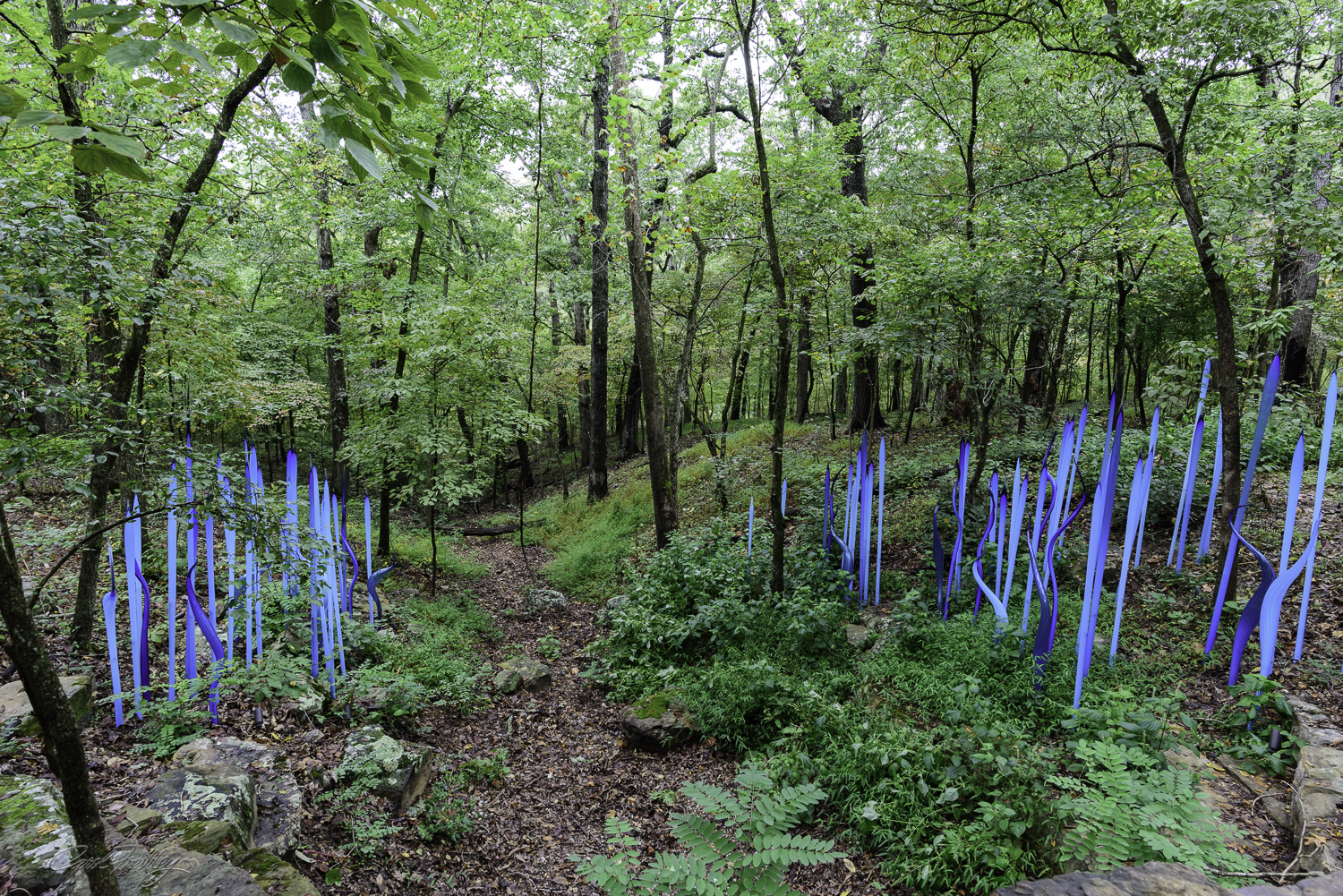 Chihuly in the Forest-13-9.jpg