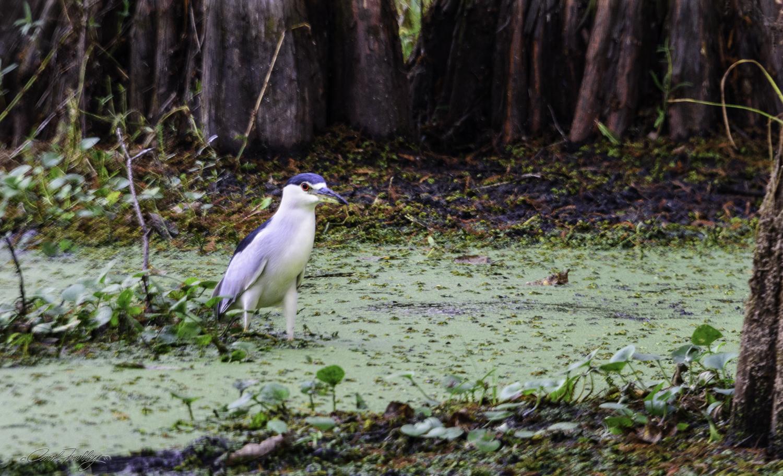 Lake Martin Swamp-71.jpg