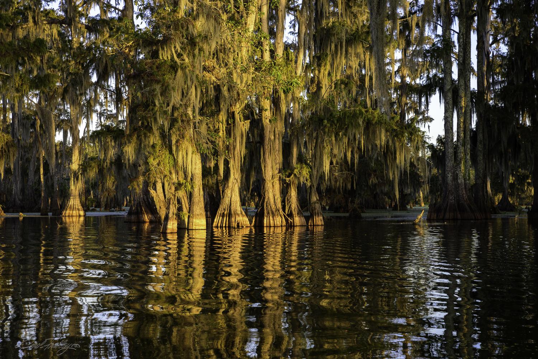 Lake Martin Swamp-109.jpg