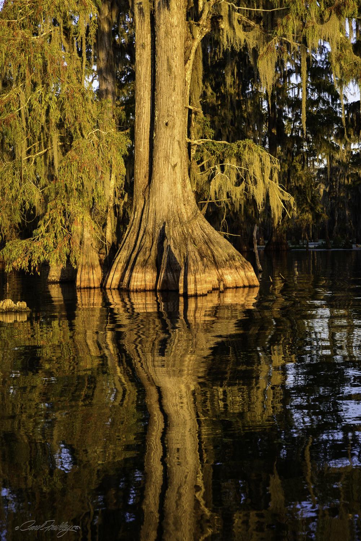 Lake Martin Swamp-112.jpg