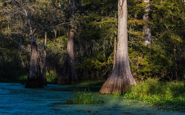 TD Swamp (306 of 48).jpg