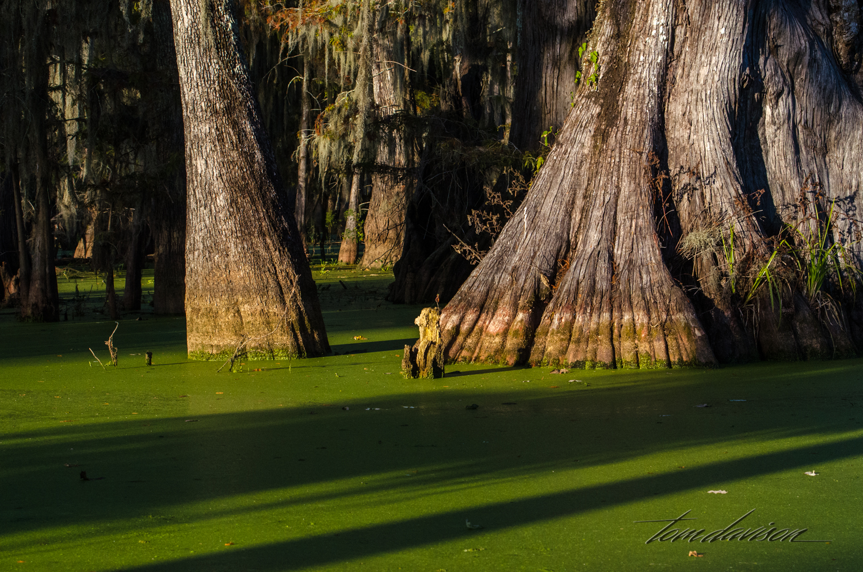 TD Swamp (305 of 48).jpg