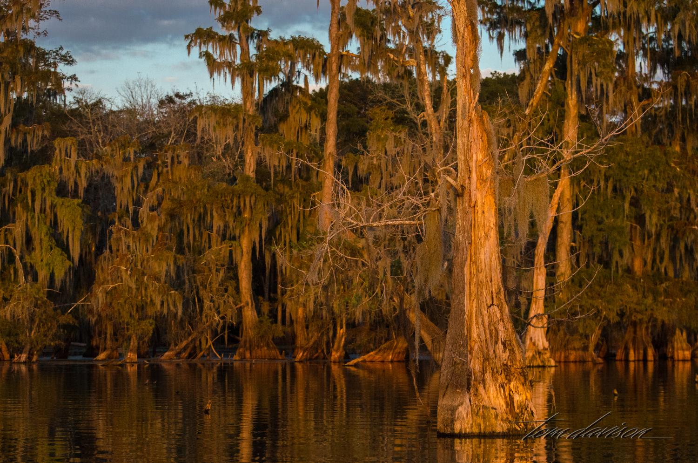 TD Swamp (315 of 48).jpg