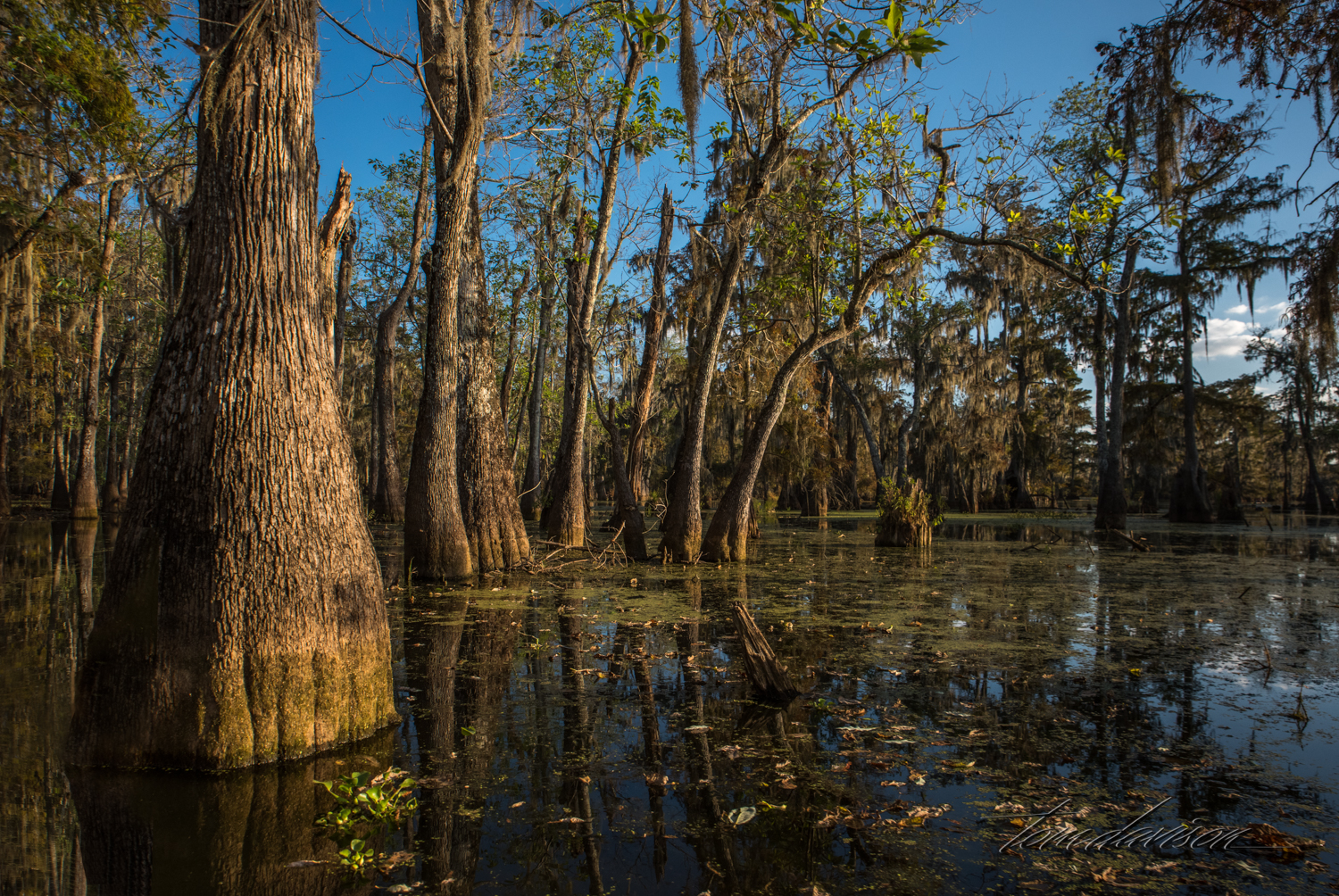 One of the first impressions I got as we started out on the swamp was that it is a messy looking place. There is so much abundant life everywhere, including below the surface of the water.