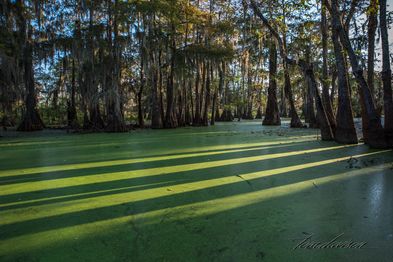 TD Swamp (324 of 48).jpg