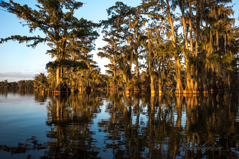 TD Swamp (332 of 48).jpg