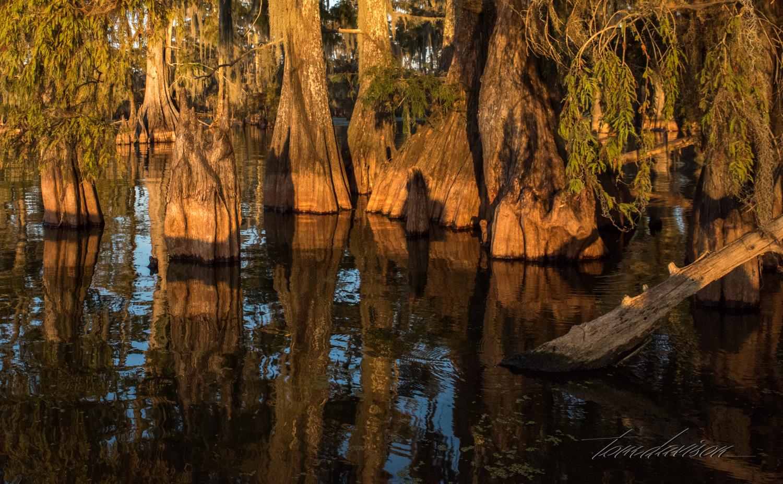 TD Swamp (334 of 48).jpg