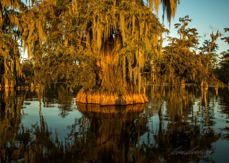 TD Swamp (340 of 48).jpg