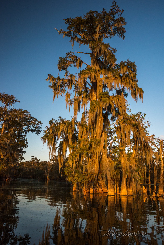 TD Swamp (341 of 48).jpg