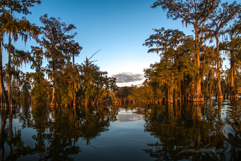 TD Swamp (344 of 48).jpg