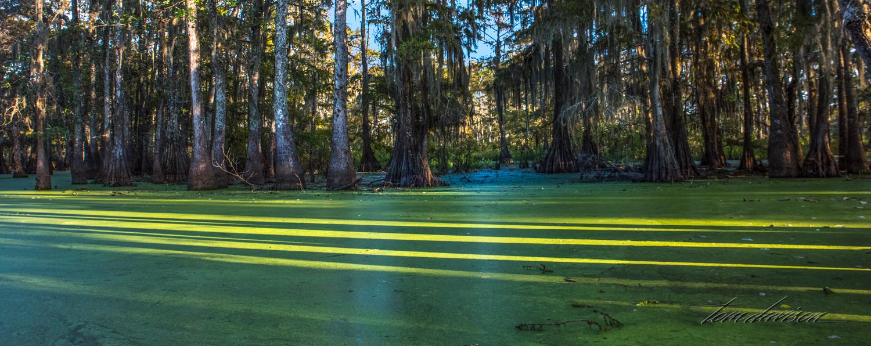 TD Swamp (323 of 48).jpg