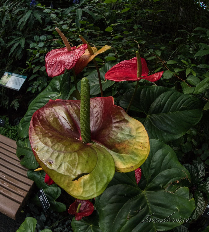 TD Botanical (390 of 98).jpg