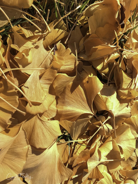 Neslon-Atkins Sculpture Garden-3.jpg