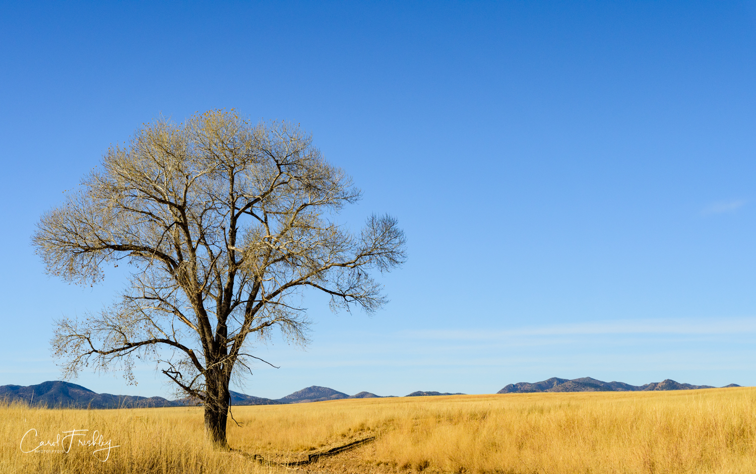 A common sight along the road. I love old bare Cottonwood trees.