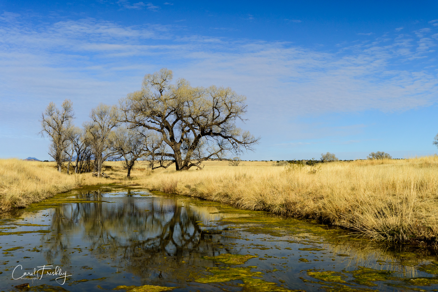 This is the San Pedro River. We spent quite a bit of time there trying to get creative reflections of the trees, grass and scum.