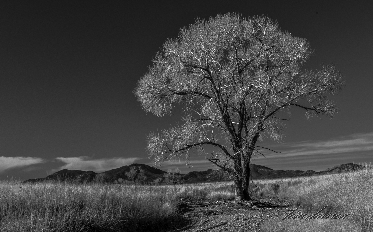 There are many ways to process for a black and white image. Doing so where the branches stand out against a dark sky is one very appealing way of doing it.