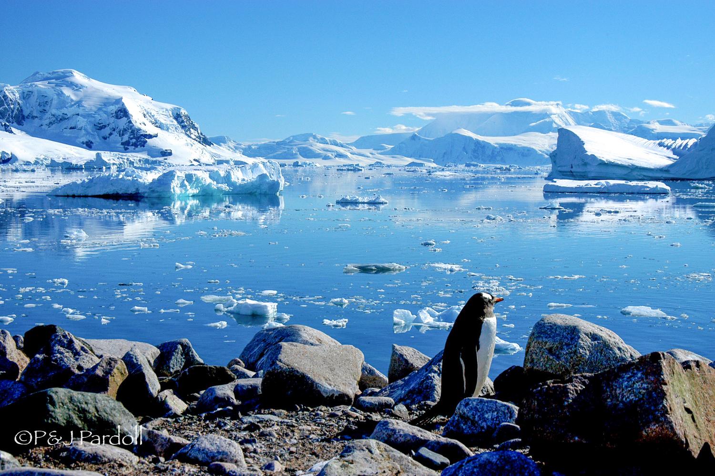 Antarctica-  2005