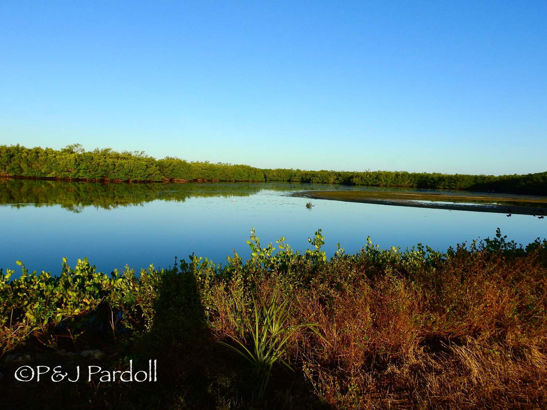 Mangrove pond