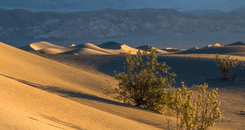 Dunes TD-4.jpg