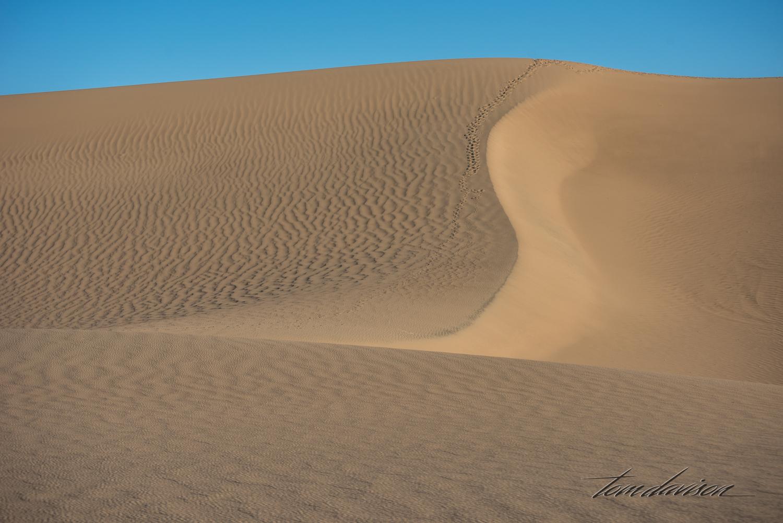 Dunes TD-11.jpg