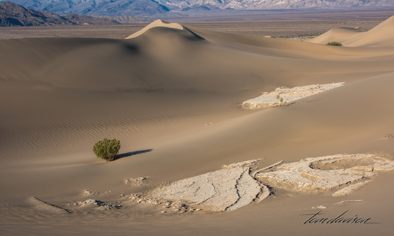 Dunes TD-25.jpg