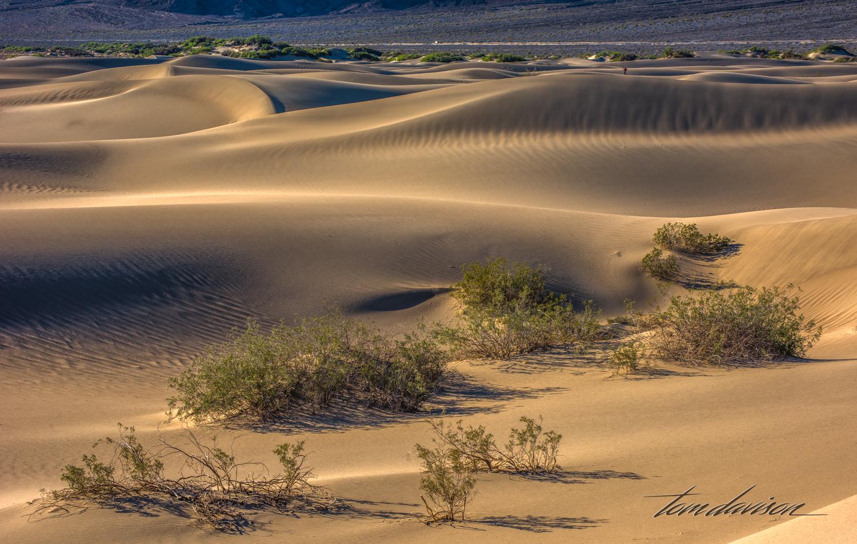 Dunes TD-28.jpg