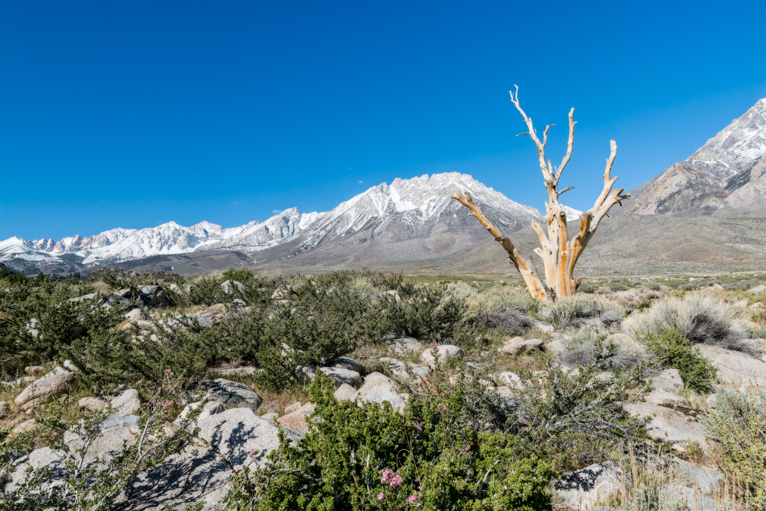 Buttermilk Canyon-16.jpg