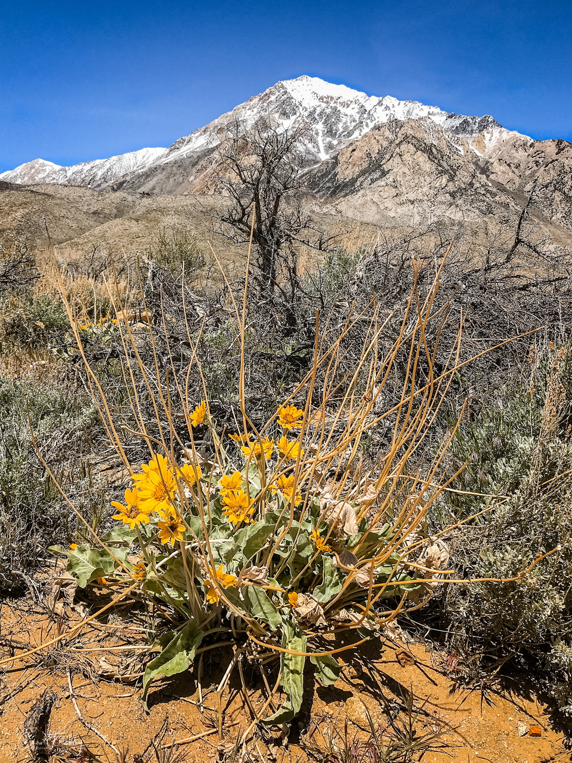 Buttermilk Canyon-22.jpg