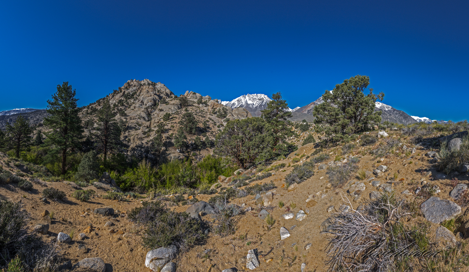 Buttermilk-6.jpg