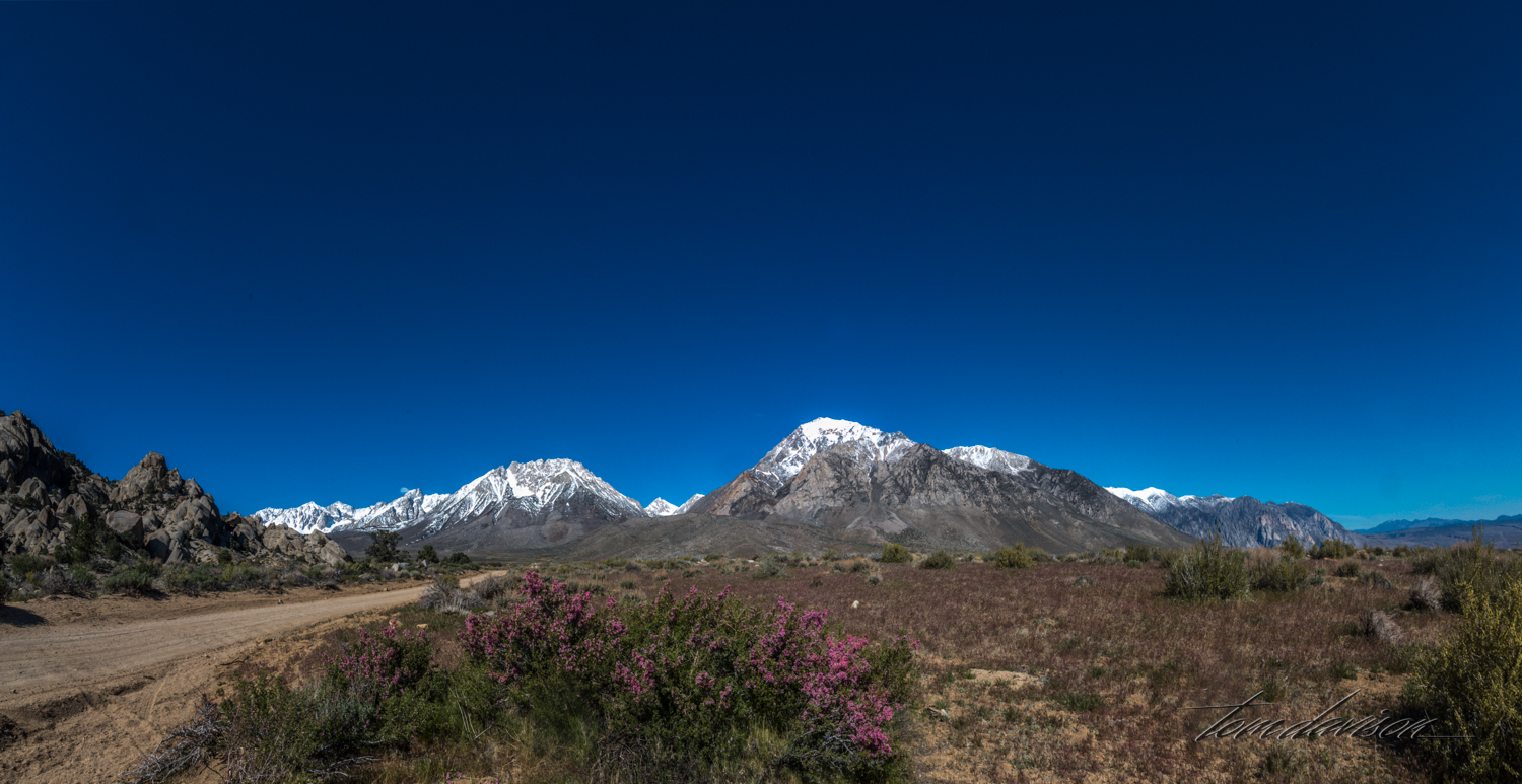 Buttermilk-8.jpg