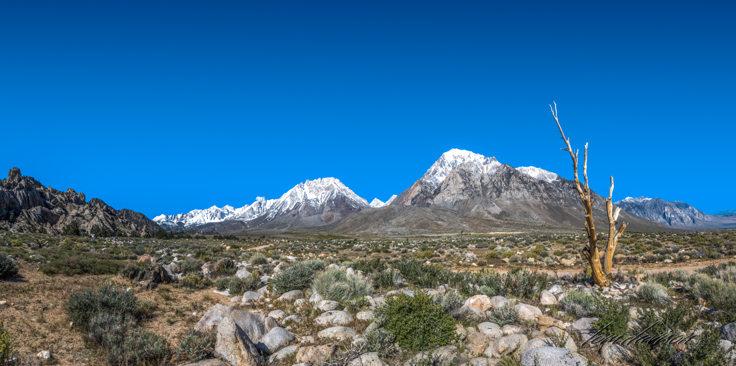 Buttermilk-9.jpg