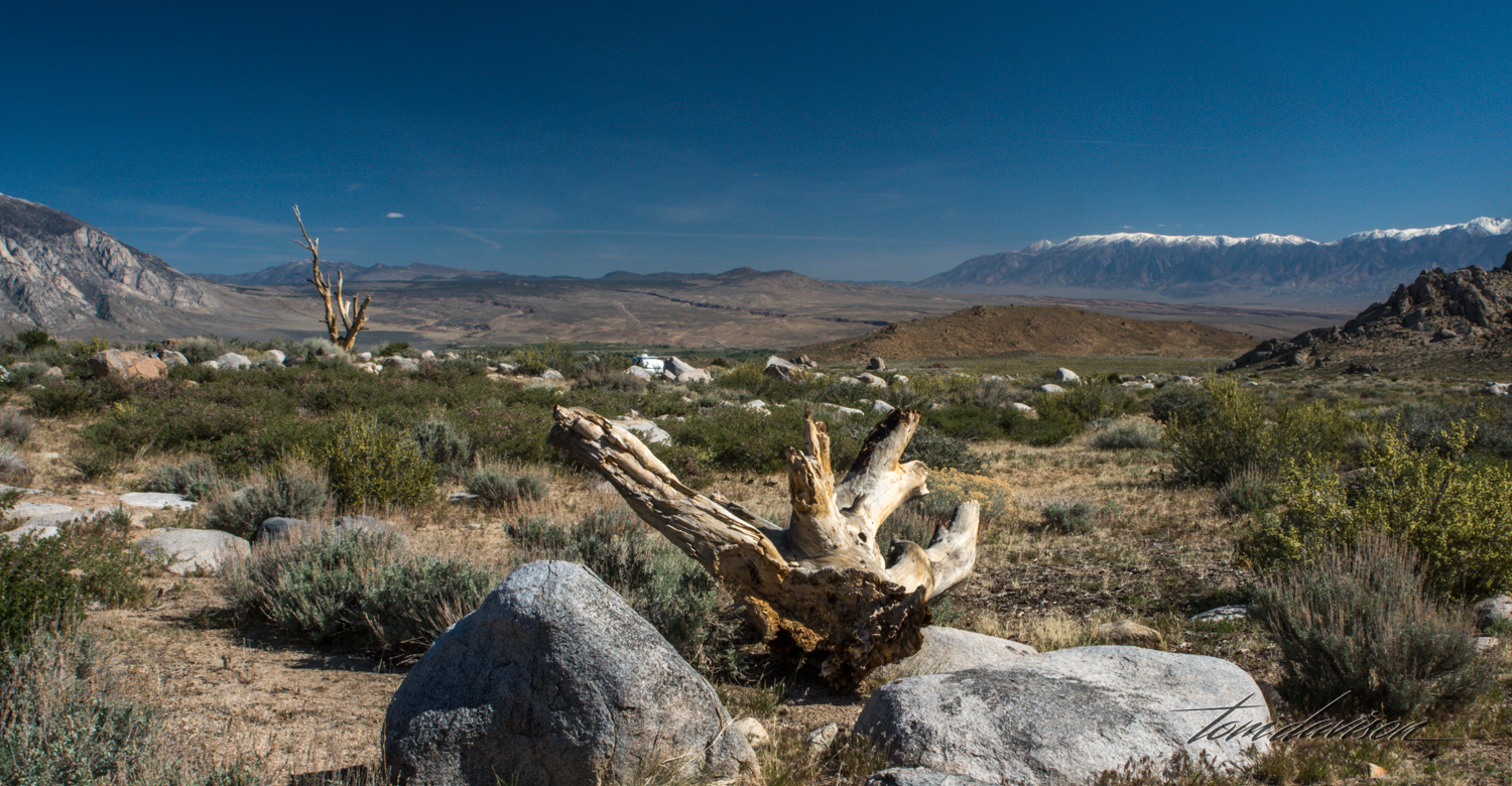 Buttermilk-11.jpg