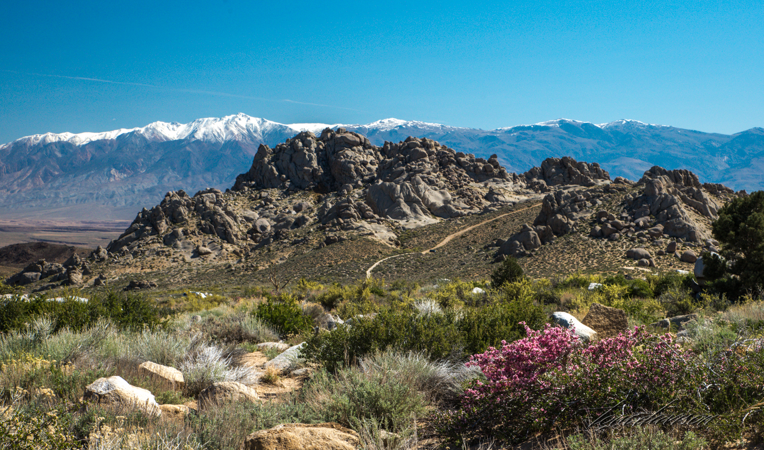 Buttermilk-13.jpg