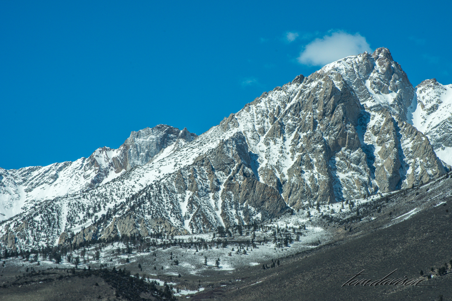 Buttermilk-14.jpg