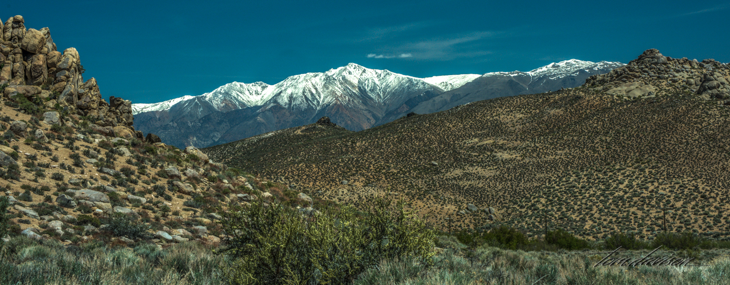 Buttermilk-16.jpg