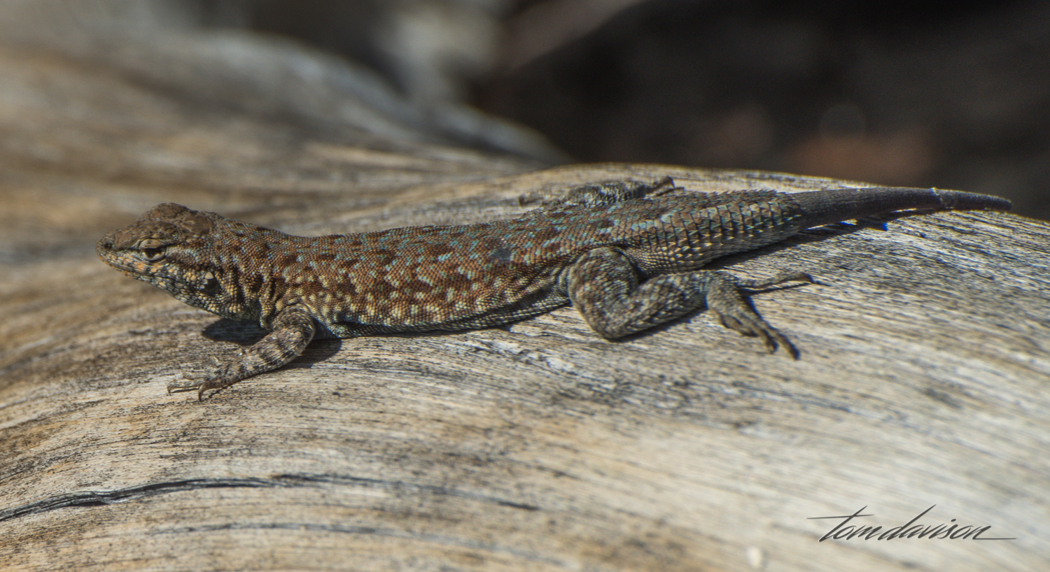 Buttermilk-1.jpg
