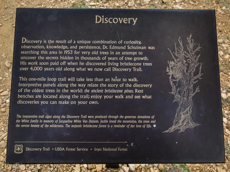 Ancient Bristlecones-1.jpg