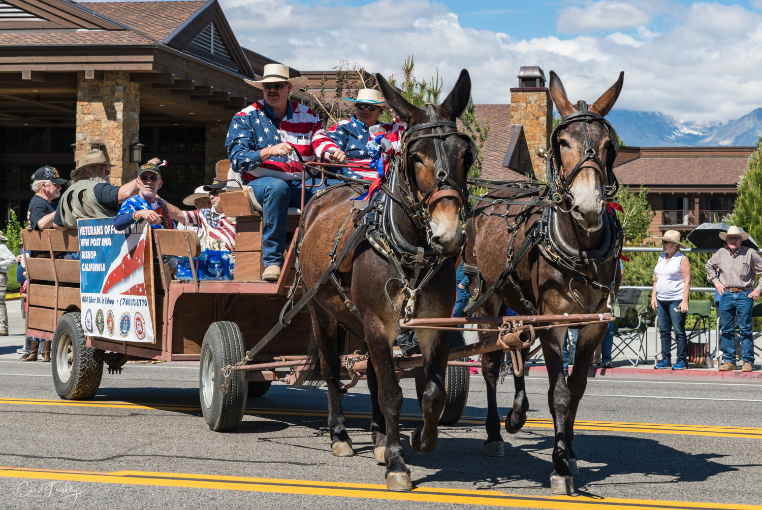 The parade sometimes moved slowly. As a result, the participants had to 'weave' back and forth along the route. We often got a direct 'look' at the mules. I ended up loving them.