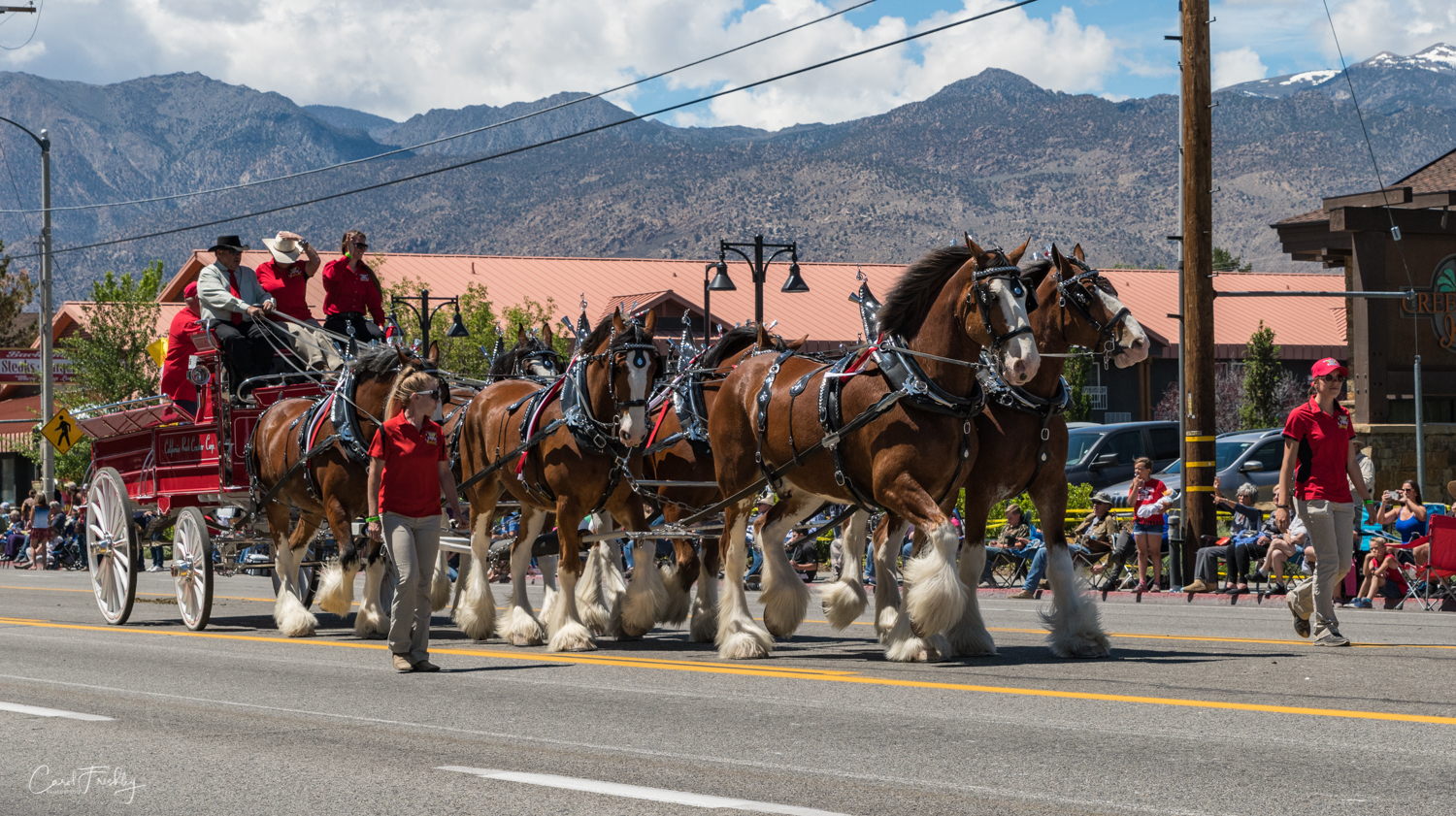 There was a small group of Clydesdales.