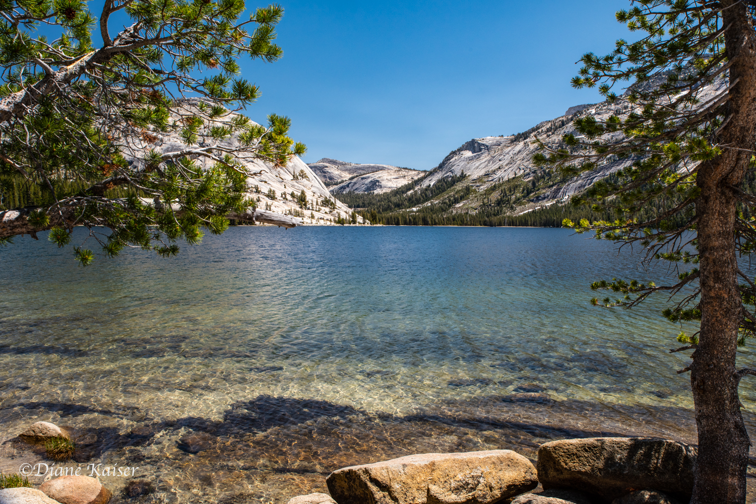 Tenaya Lake is easily accessible from the road.