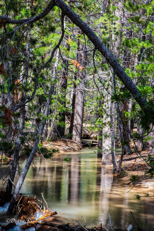 DK Mammoth Lakes-17.jpg