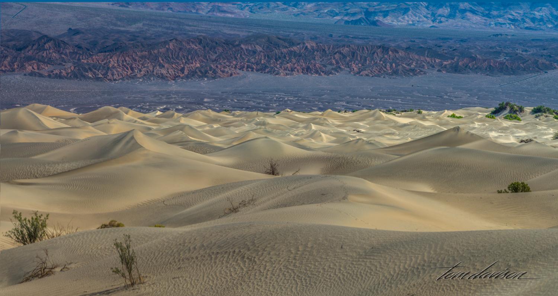 Mesquite Sand Dunes in Death Valley.
