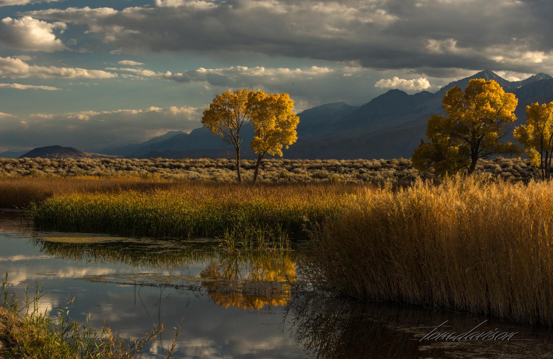 Ponds near Bishop.