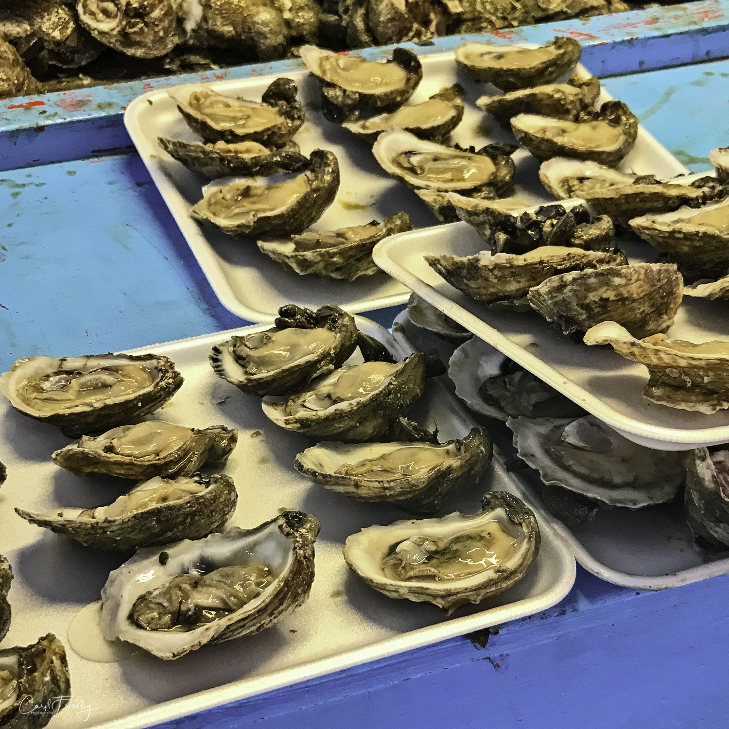 Every spring an Oyster Festival is held with the proceeds to benefit the Rockport Volunteer Fire Department. theses lovely oysters are shucked as you watch and sell for $1 each. They were very popular, with some folks walking off with a tray of 30!
