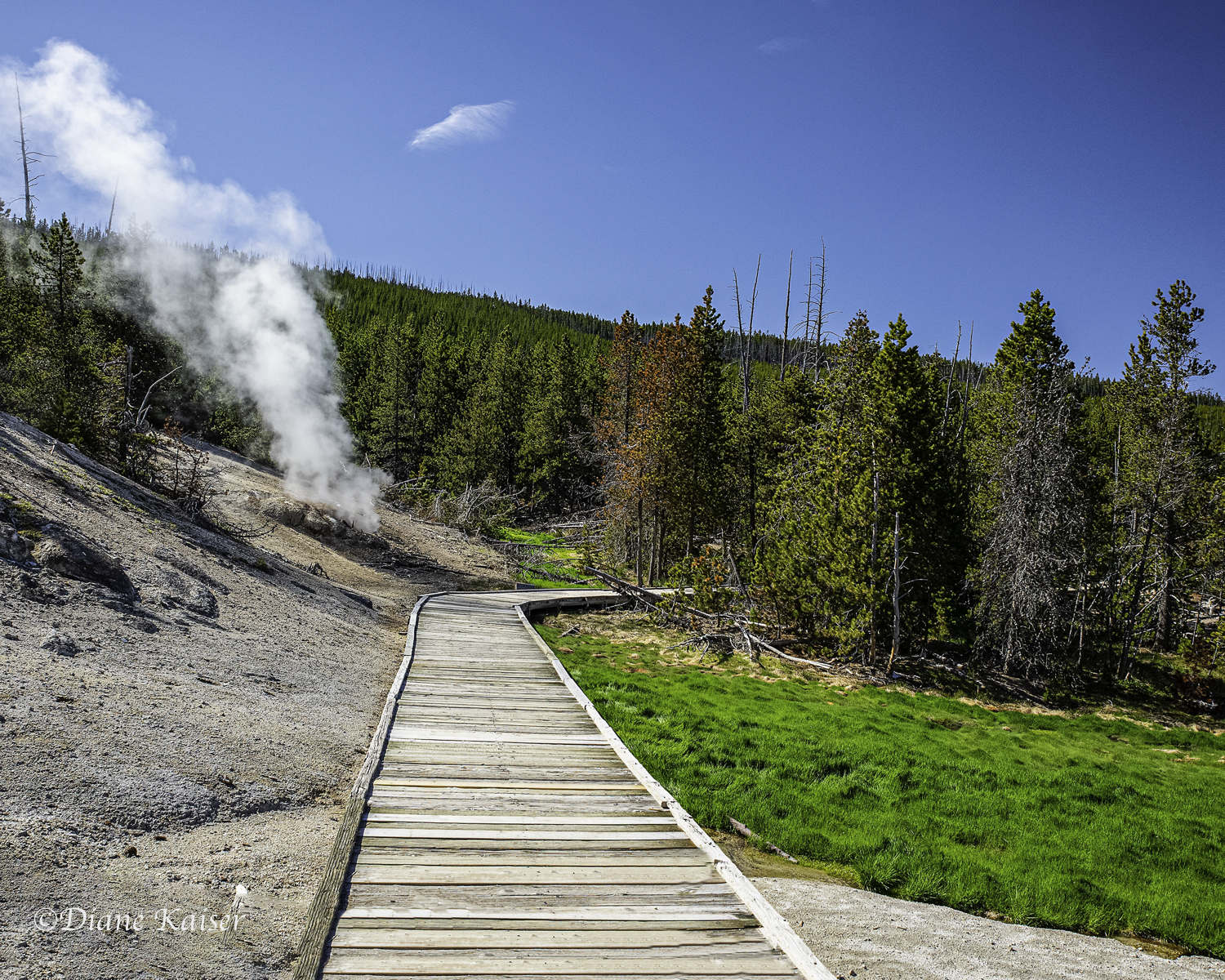Wooden path in parts of Norris Back Geyser Basin.