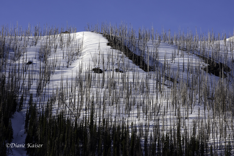 DK Yellowstone-2.jpg
